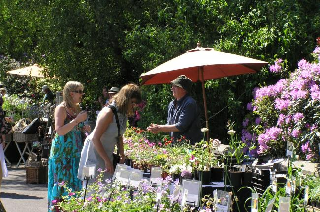 Plant Hunters' Fair at Bodenham Arboretum, Kidderminster
