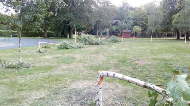 Several trees in Brinton Park have been snapped in half. Photo by Wayne Davies