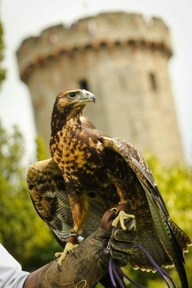 Keeping Birds Of Prey Safe During Lockdown At Warwick Castle Kidderminster Shuttle