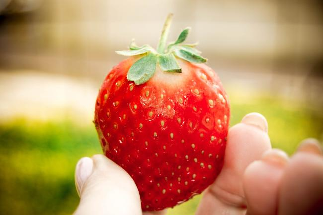 STRAWBERRY: How those without a job or on furlough can apply to pick fruit on farms. Picture: Pixabay
