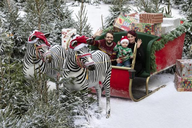 Kidderminster Shuttle: The park's Discovery Trail turned into a winter wonderland last year