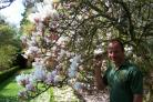 Flower power: Head gardener, Michael Darvill in the arboretum's magnolia walk with the trees.