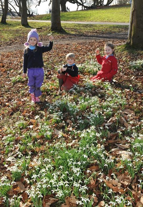 Snow joke: From left, Isabella Kennedy, 5, Oscar Niblett, 6 and Lucy Underwood, 7, on the snowdrop hunt at Abberley Hall School.