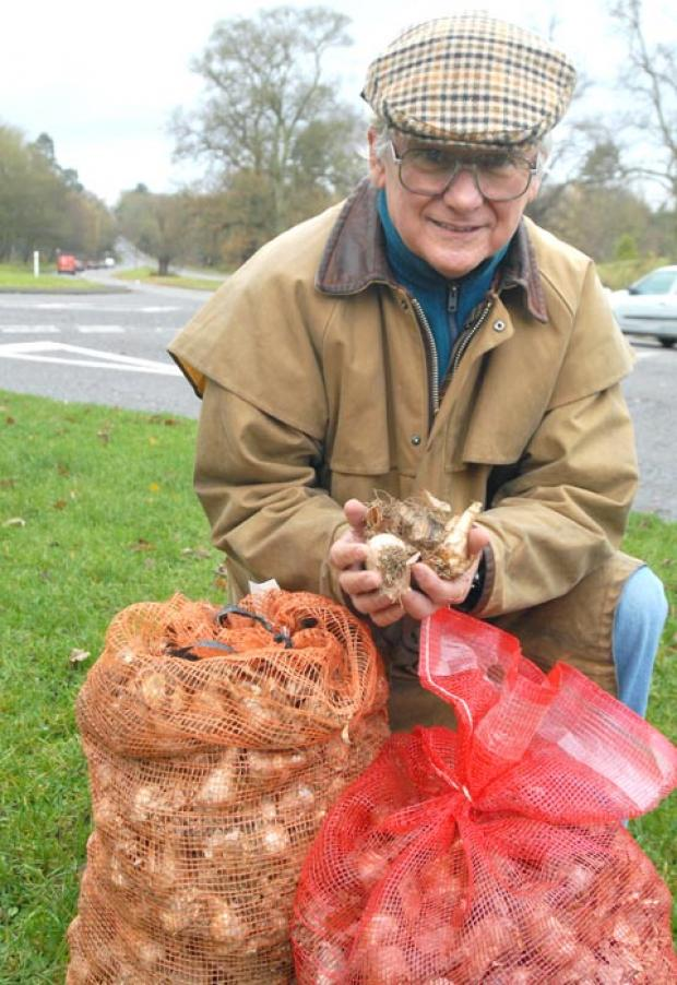 Ready to bloom: Chris Dale plants this year's bulbs. Picture: MIRIAM BALFRY. Buy this photo 491209M at kidderminstershuttle.co.uk/pictures or by calling 01562 633333.