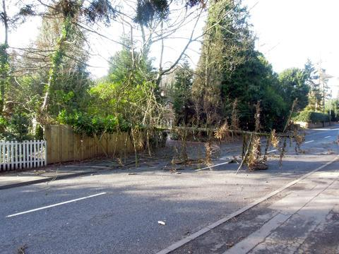 Road Block: The tree in Comberton Road, Kidderminster. Photo: Bob Millward