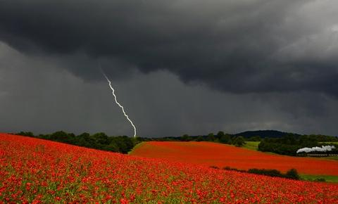 Winning snap: Danny Beath's photo of a storm over a poppy field.