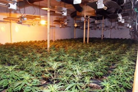 Stourport cannabis factory - six still being questioned