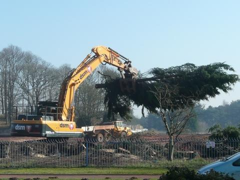 Timber: Trees lining the Stourport Road and former British Sugar site are torn down. Photo: Gary Cull.
