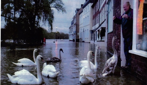 'Well known': Stanley Lewis feeding swans during floods
