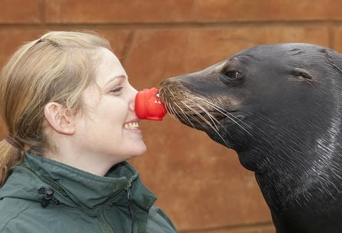Making a splash: Keeper Amy Sewell with sea lion Callum.