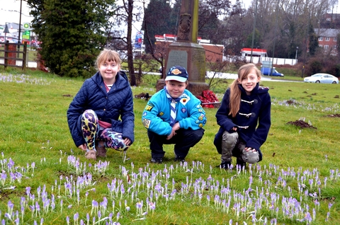 Blooming marvellous: Samantha Wass, William Watson and Morgan Preedy with the crocus plants. Photo: Colin Hill.