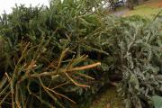 Hagley garden centre invites people to recycle their Christmas trees