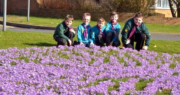 SEA OF PURPLE: From left, Scouts Daniel Cooper, Toby Turvey, Jack Cook, Toby Cook and Myles Edwards. Photo: COLIN HILL.