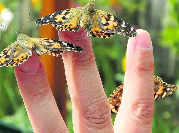 Moth conservation evening set for Chaddesley Wood