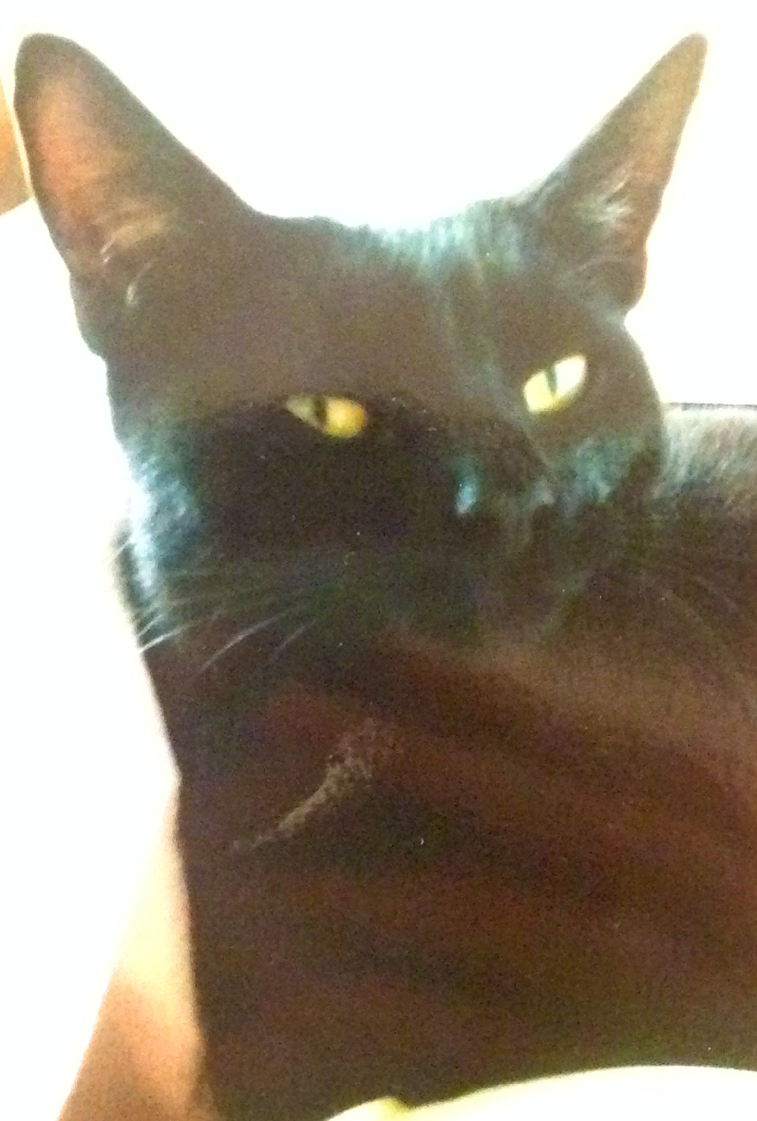 GOOD COMPANION: Black cat Sam is believed to have been shot and killed with an air rifle.