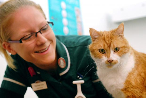 AWARENESS CAMPAIGN: Rachel Inns, of Riverside Vets, with Gavin the cat. 231408M