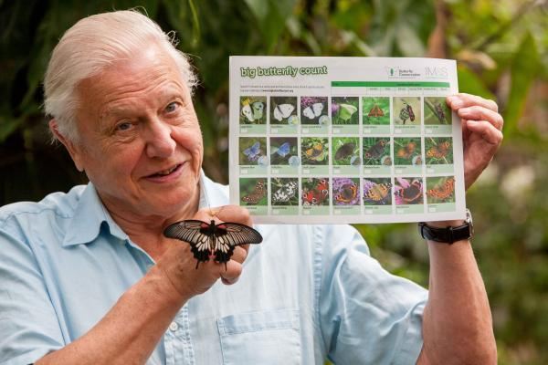 BUTTERFLY COUNT: Sir David Attenborough has backed the project.
