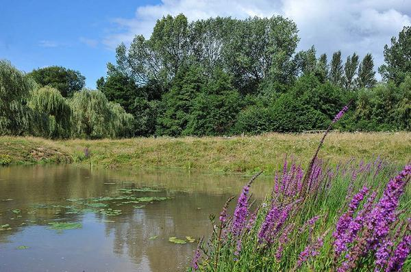 SOMETING FISHY: The fish refuge at Spennells Valley Nature Reserve in Kidderminster. Picture: The