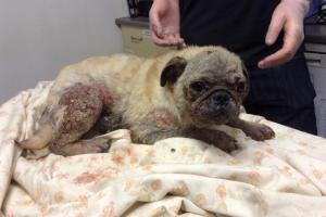 Pictures reveal appalling dog cruelty in  Wyre Forest