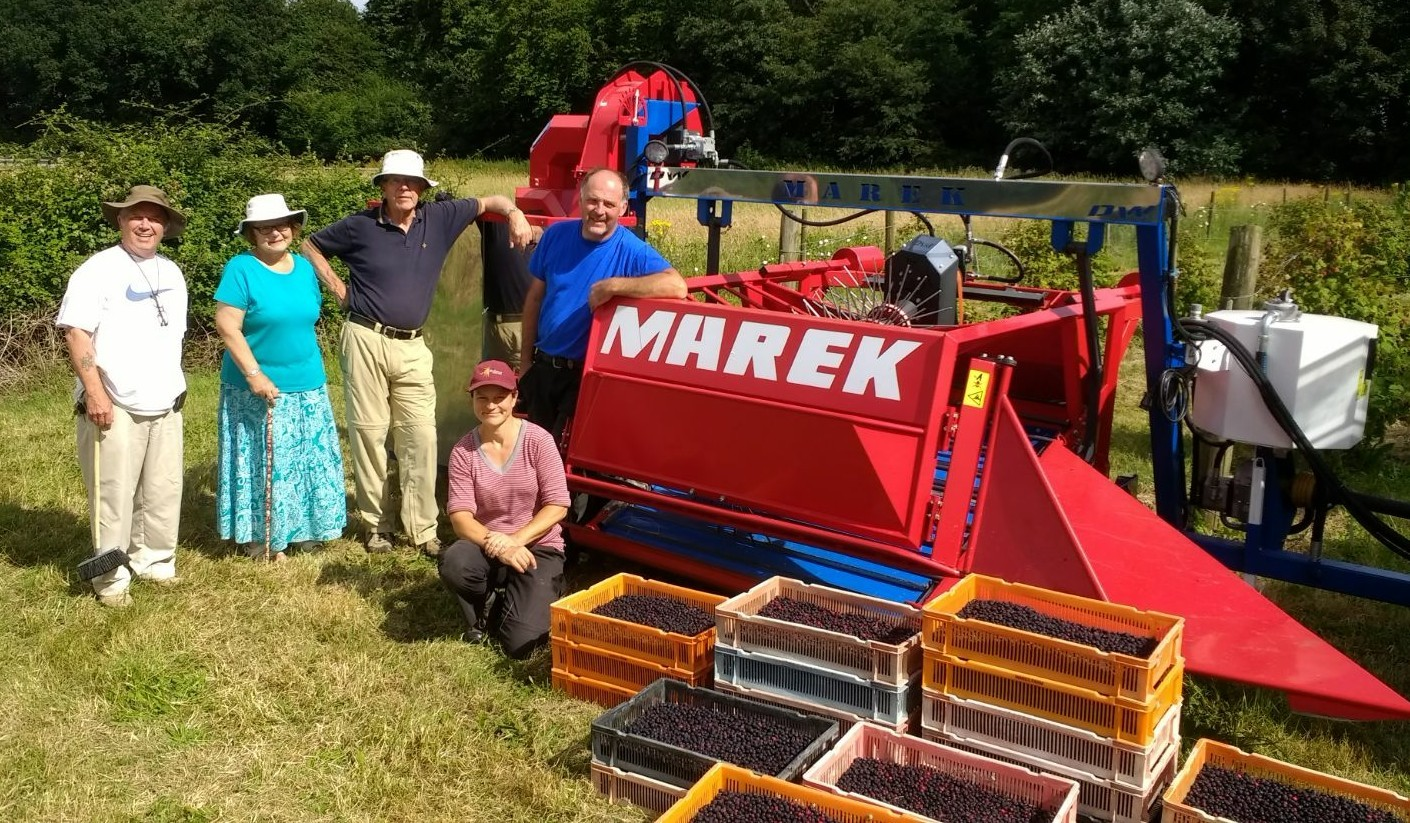 HARVEST: Sophie Sidaway (front) with members of her family testing a juneberry harvester last year. Picture: Pershore Juneberries Ltd.